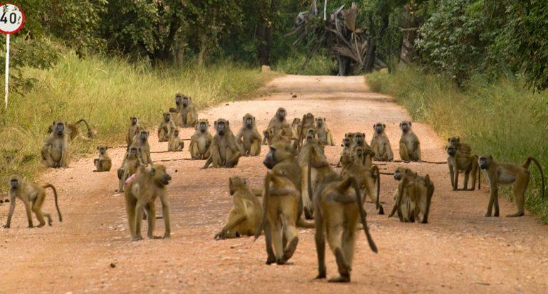 Cinco destinos alternativos para ir de safari