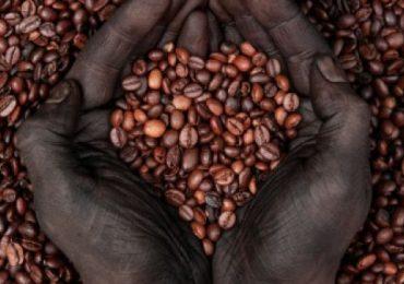 Coatepec: Arquitectura y café