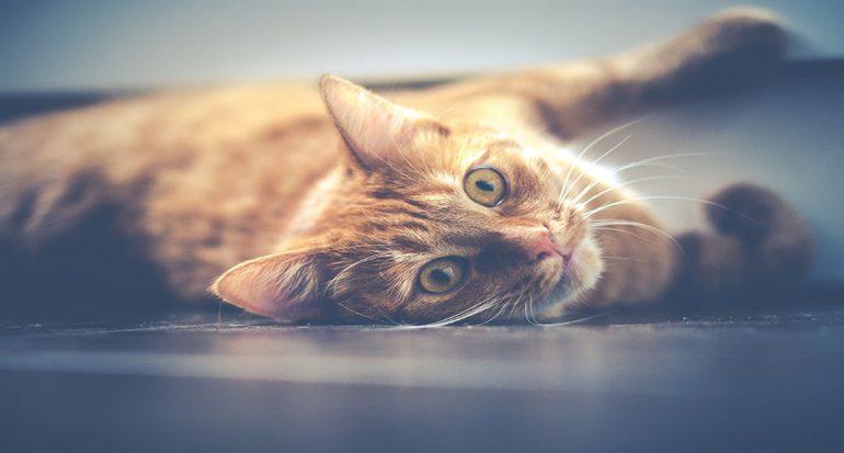 Conducta felina: ¿Por qué los gatos se comportan raro?
