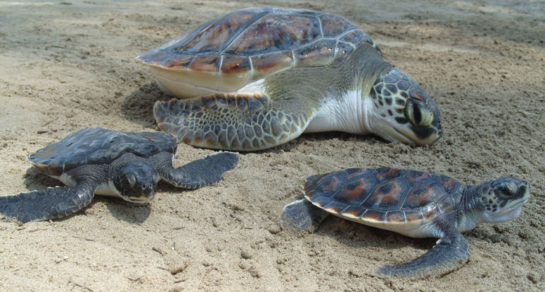 Confirmado con drones: Costa Rica está repleta de tortugas