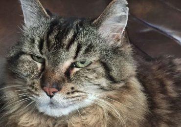 Conoce al gato más viejo del mundo