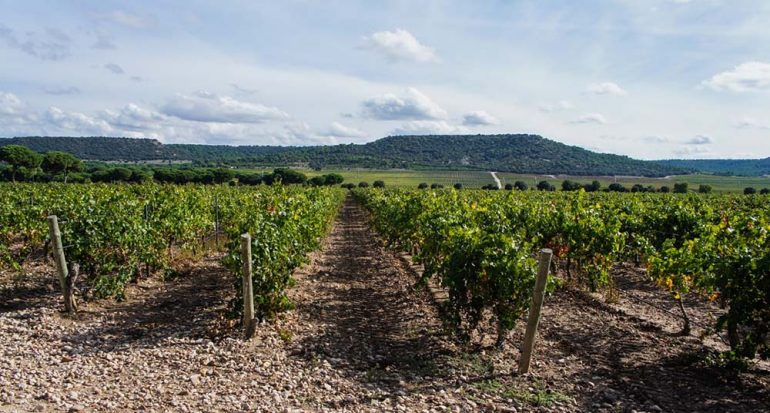 Conoce los mejores vinos de España
