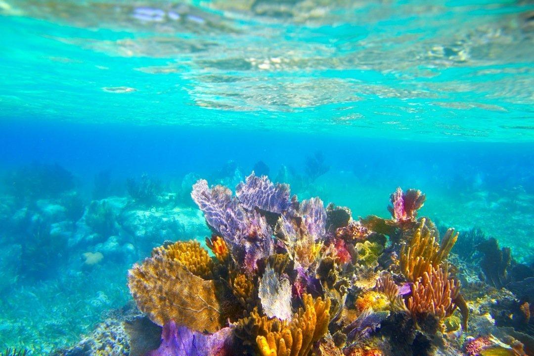Corales vs. Calentamiento global