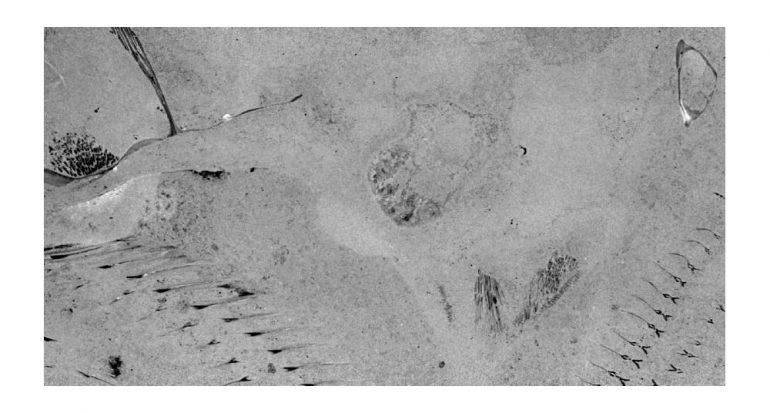 Corazones de piedra: un hallazgo fósil fabuloso