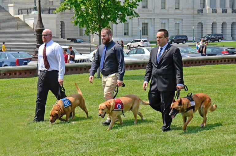 Cuando los perros del Ejército se jubilan