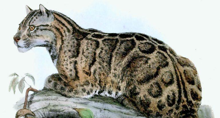 Cuatro felinos extintos en los últimos 100 años
