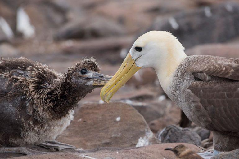 Día 7 en las Islas Galápagos