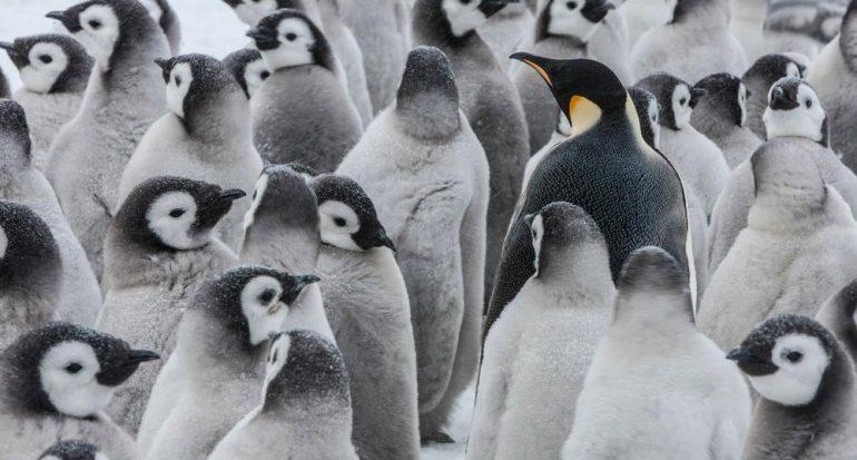 Día Mundial del Pingüino: ¿Acaso existe un ave más adorable?