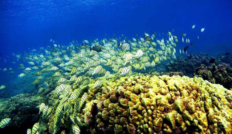 el cuidado de los corales