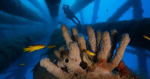 De reliquias a arrecifes