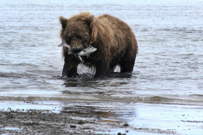 De safari en el sur de Alaska