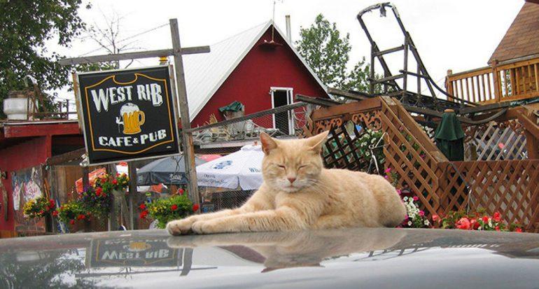 Descubre en qué localidad del mundo un gato fue alcalde