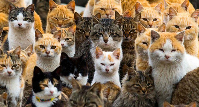 Descubre la isla de los gatos