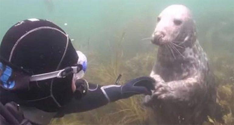 Descubre qué le pide esta foca a un buzo