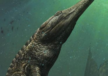 Descubren cocodrilo marino tamaño monstruo