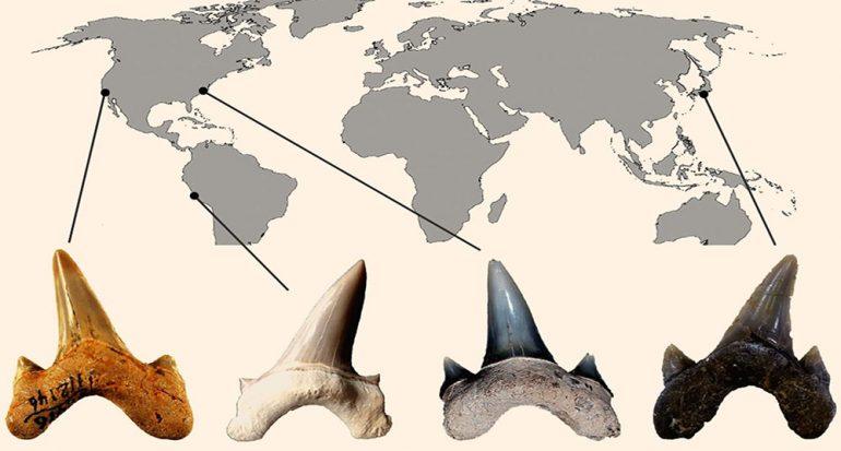 Descubren fósil de tiburón del tamaño de un auto