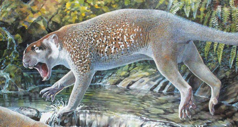 Descubren nueva especie de león marsupial