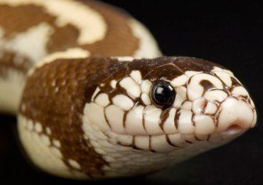 Descubrimos la razón de que las serpientes se deslicen