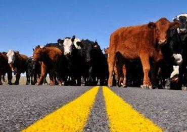 Destinos Protegidos | Carreteras verdes: Parte 2