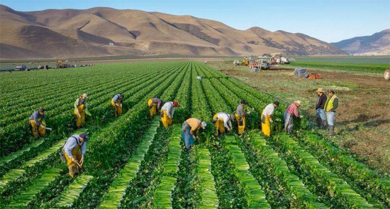 Disminuir el desperdicio de comida podría mitigar el cambio climático