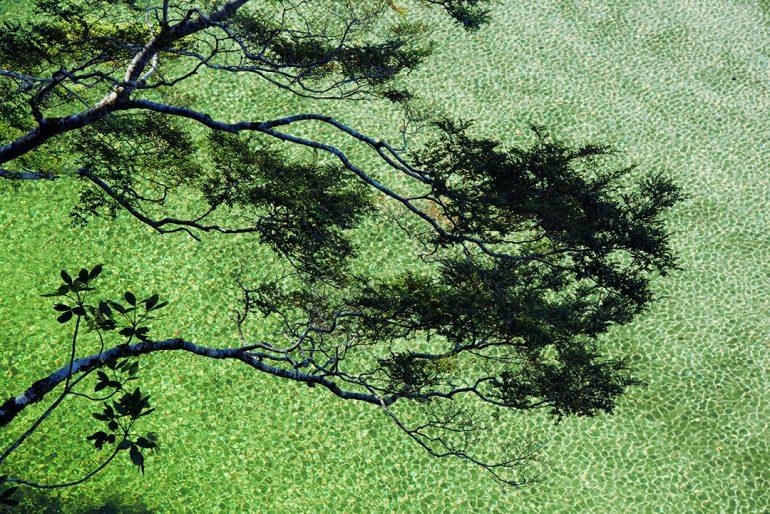 Donde crecen las piedras verdes