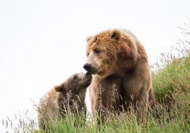 Dos osos fueron liberados después de estar 17 años en el circo