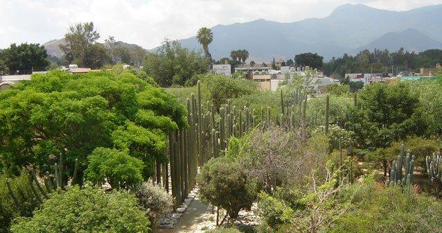 El Jardín Etnobotánico de Oaxaca