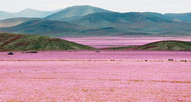 El Niño pinta de colores el lugar más árido del mundo