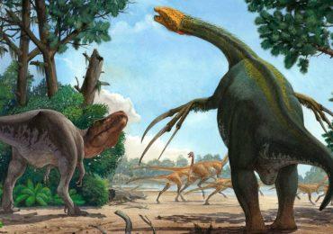 El animal con las garras más largas de todos los tiempos