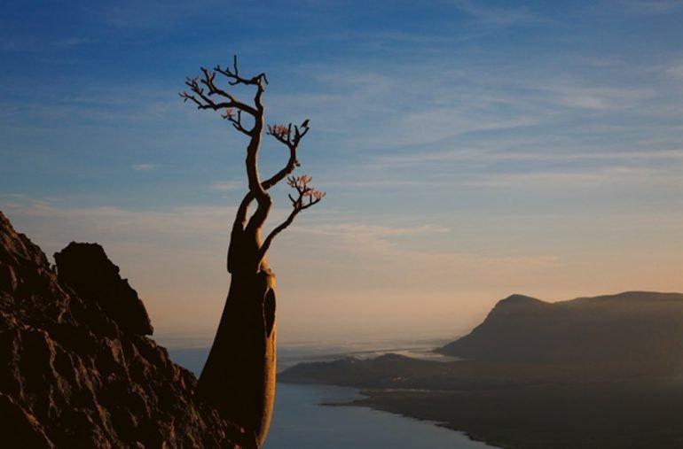 El archipiélago de Socotra