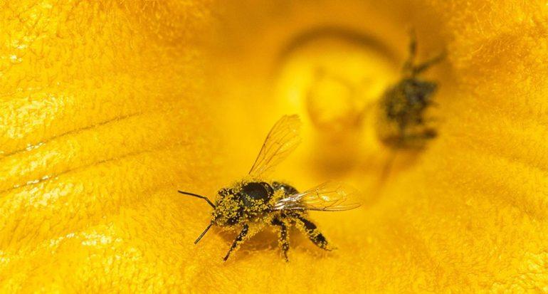 El cambio climático agrava tus alergias