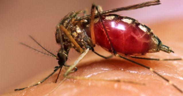 El cambio climático precipita el aumento del dengue