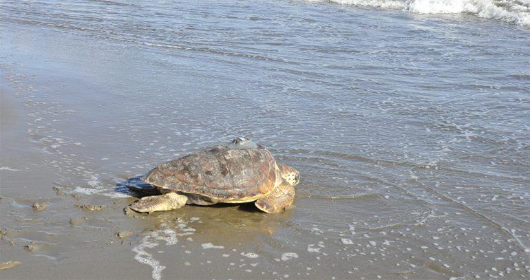 El camino de tres tortugas