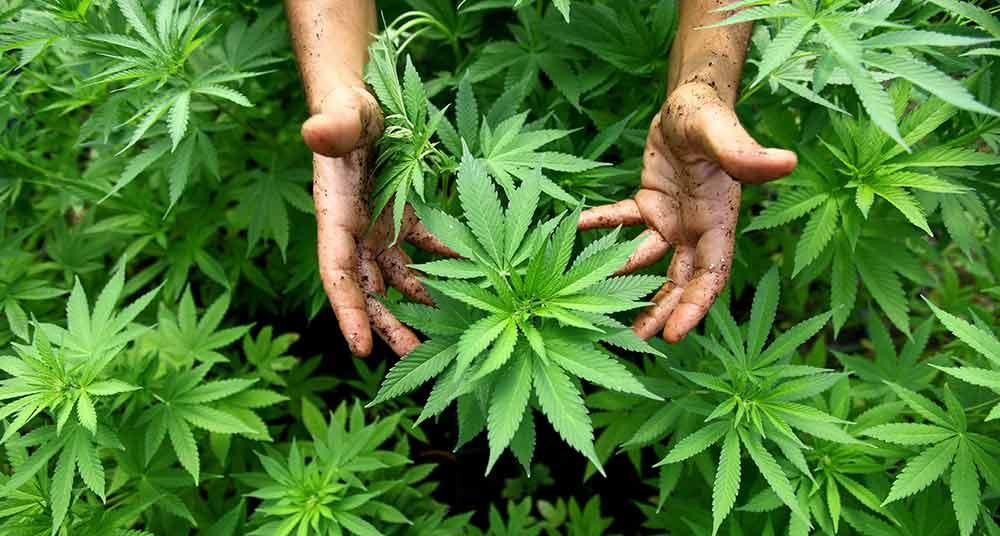 Males que puede aliviar la marihuana