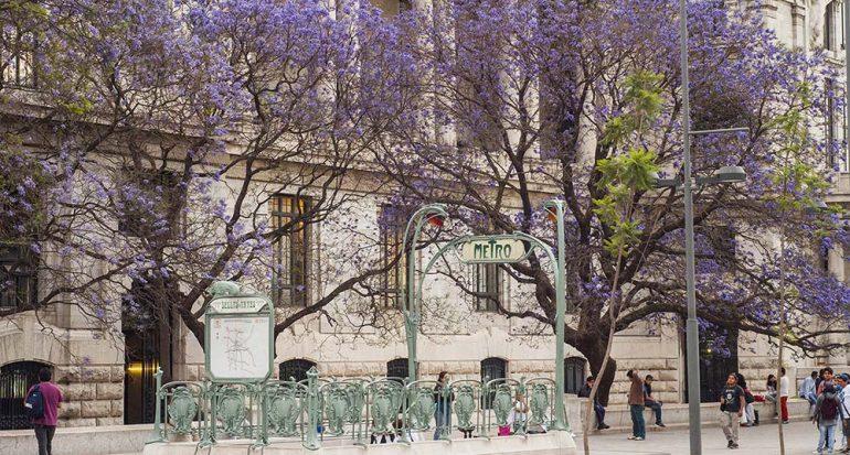 El color lila pinta la Ciudad de México