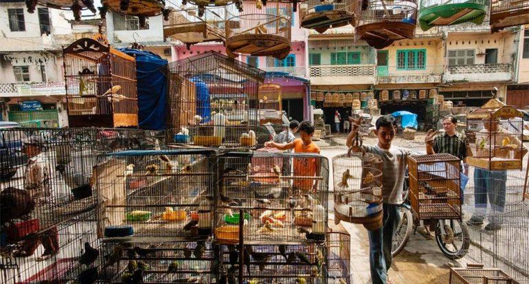 El daño de los florecientes mercados de aves de Indonesia