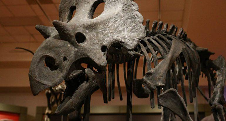 El dinosaurio X estrena nombre
