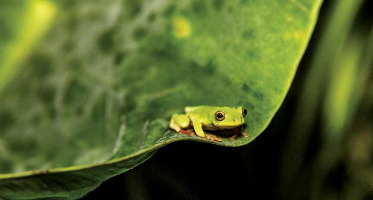 El enigma de una rana