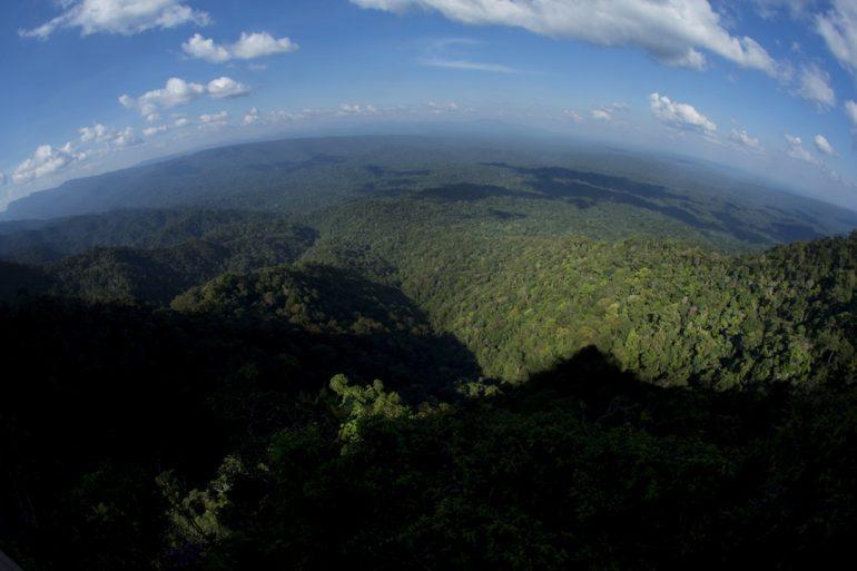 El esfuerzo por redefinir los bosques de Perú