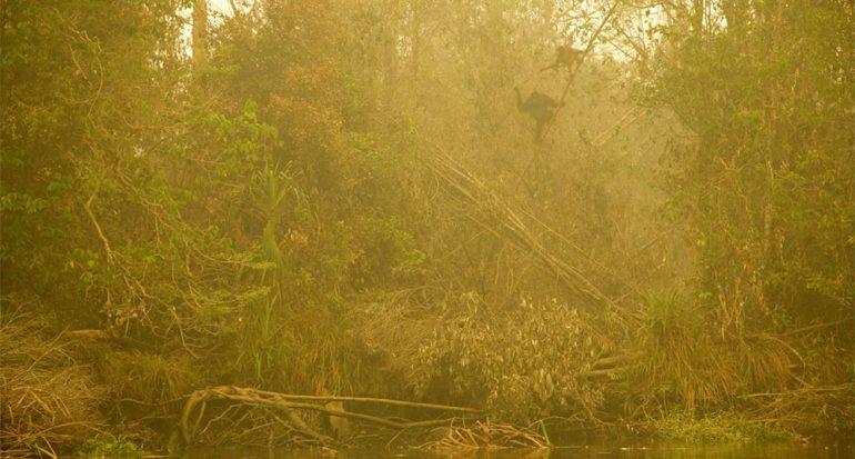 El fuego que amenaza a los orangutanes