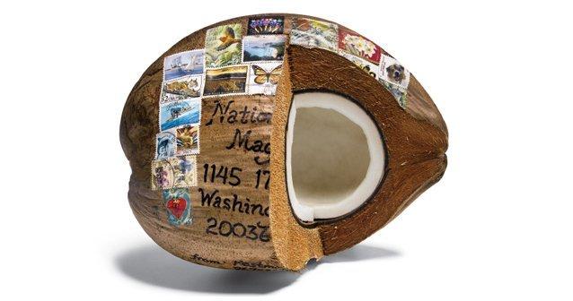 El maravilloso coco