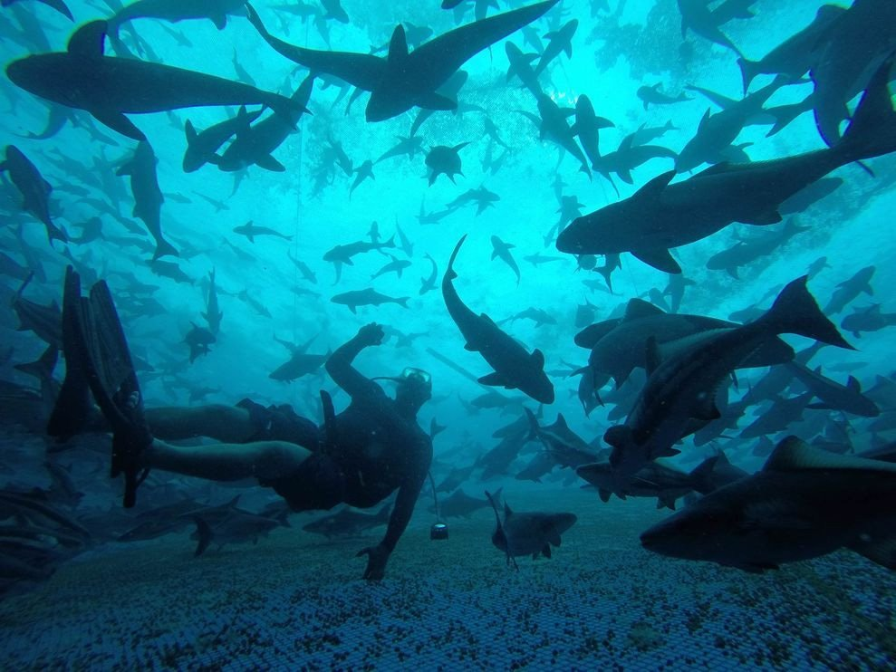 El mayor criadero de peces national geographic en espa ol for Criaderos de pescados colombia