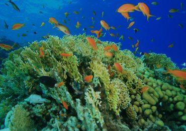 El peligro para la vida marina