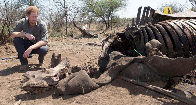 El príncipe Harry regresa de África frustrado por la caza furtiva