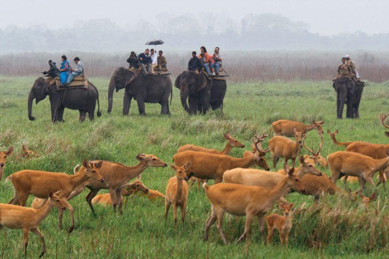 El reino de las praderas en India
