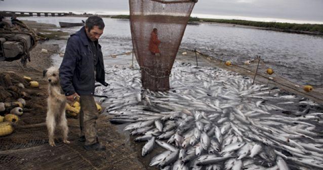 El reino del salmón