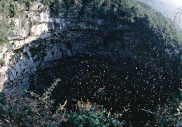El sótano de las golondrinas