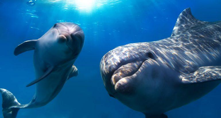 El sueño del delfín