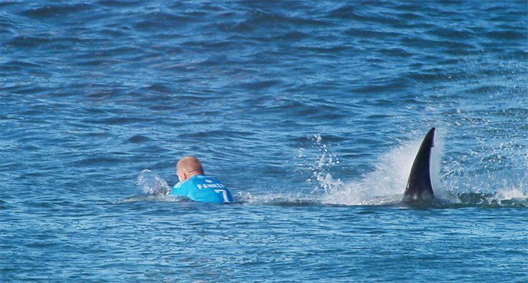El surfista atacado por el tiburón hizo lo correcto