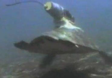 El viaje de la tortuga negra